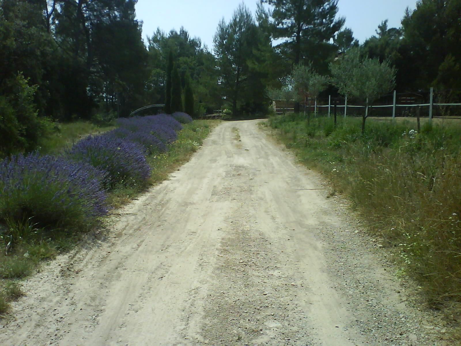 chemin entrée maison-juillet 2010 - Copie